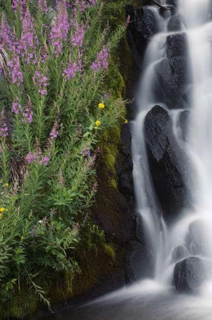 Wildflowers along Kings Creek, Lassen Volcanic National Park, Mount Lassen, California, USA