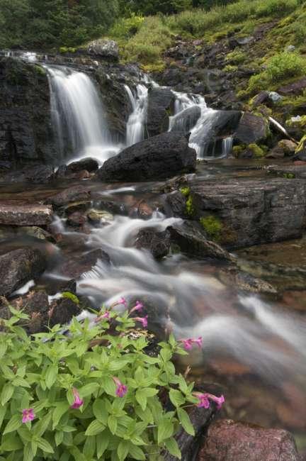 Waterfall and wildflowers, Waterton Glacier International Peace Park, USA - Canada