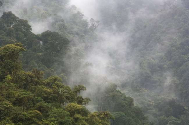 Overview of the cloud forest, And�s Mountains, Tandayapa Birding Lodge, Ecuador