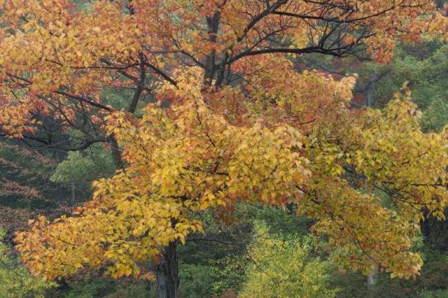 Harriman State Park, New York, USA