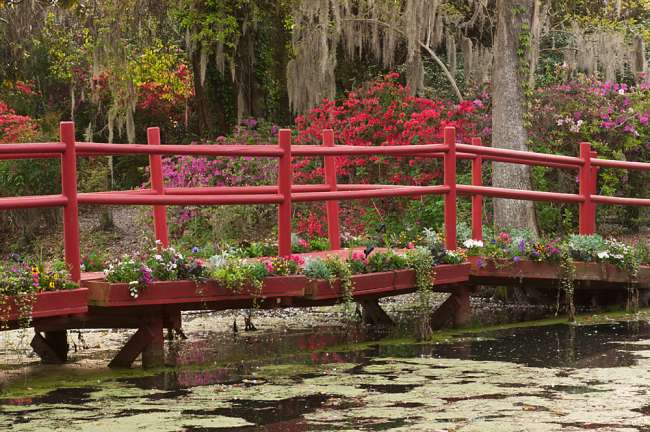 Charleston, South Carolina, USA.  Azaleas in bloom ialong a bridge n the spring.