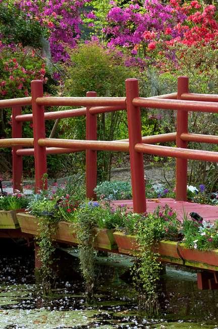 Charleston, South Carolina, USA.  Azaleas in bloom ialong a bridge n the spring.