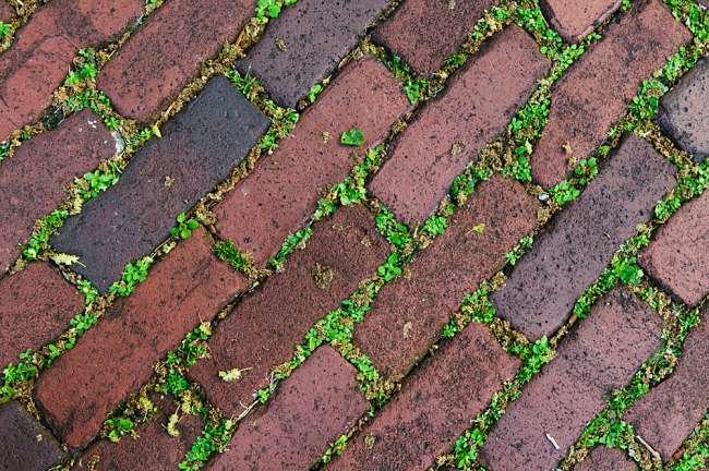 Charleston, South Carolina, USA.  Moss grows between the bricks in historic Charleston.